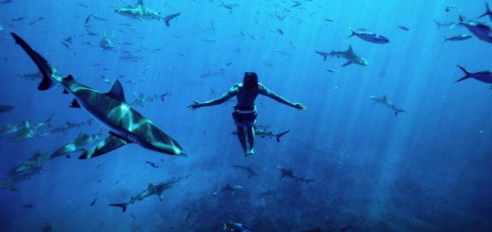 moorea coraal gardeners ocean requins