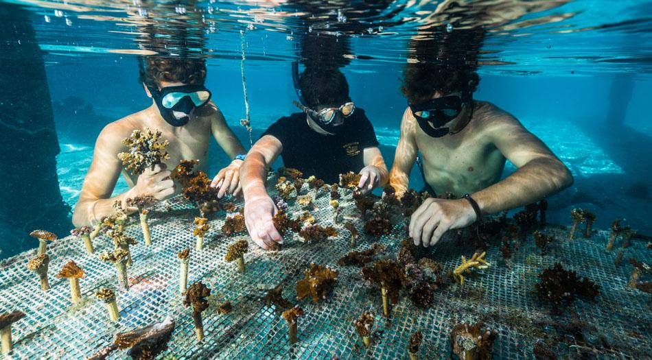 moorea coral gardeners table bouturage