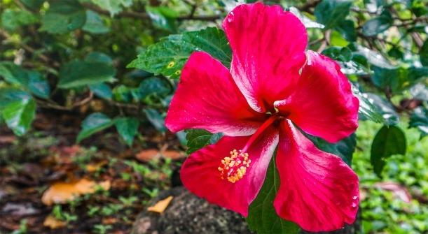 polynesie francaise culture maohi fleur