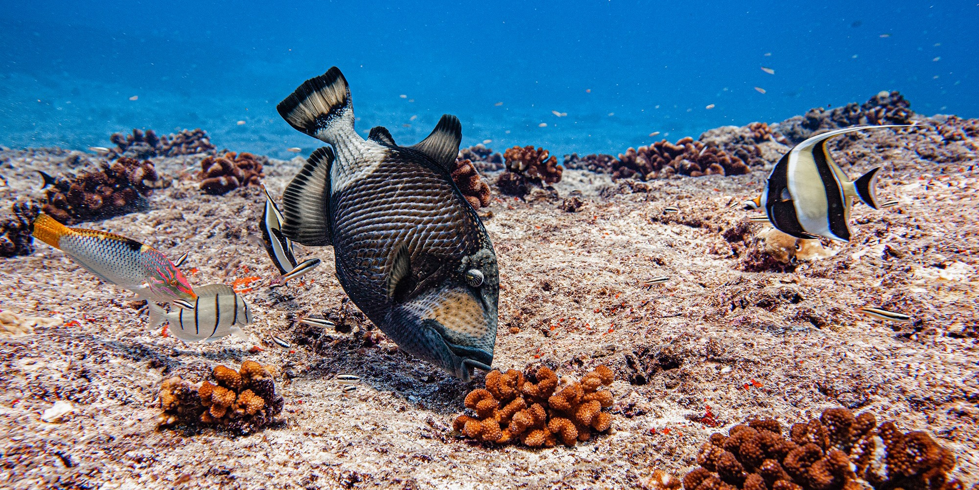 plongée sous marine à Tikehau