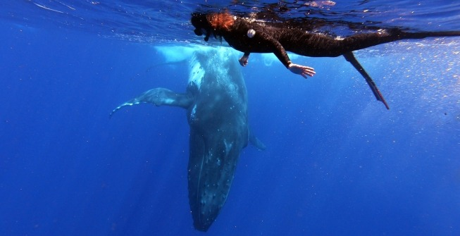 obersation-baleines-responsable-polynesie
