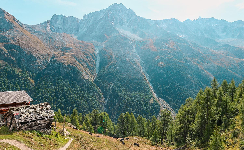 road-trip-helvetique-vue-paysage-montagne-vaches