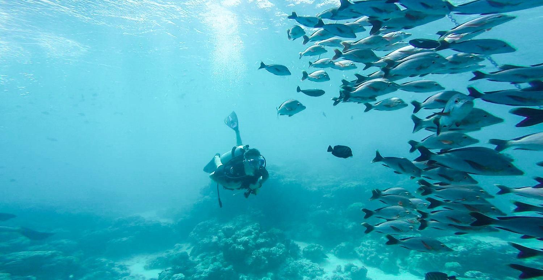 plongee sous marine rangiroa