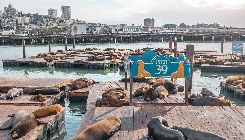 pier 39 phoques