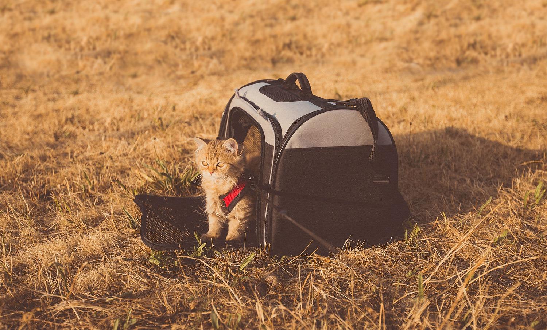 voyager avec son chat cage de transport