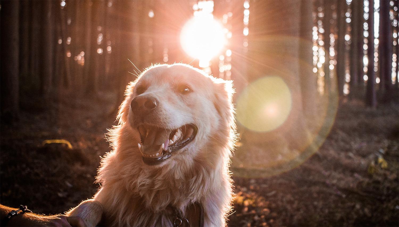 voyager avec son chien contre l'abandon