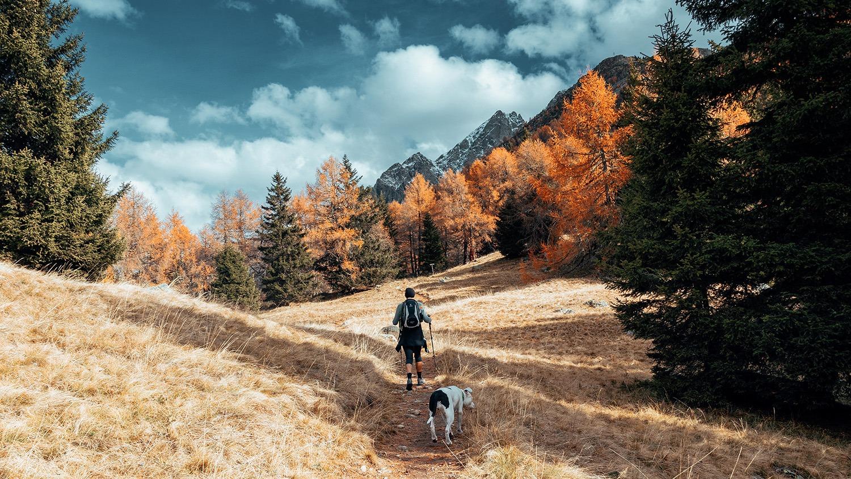 voyager avec son chien ou chat randonnee